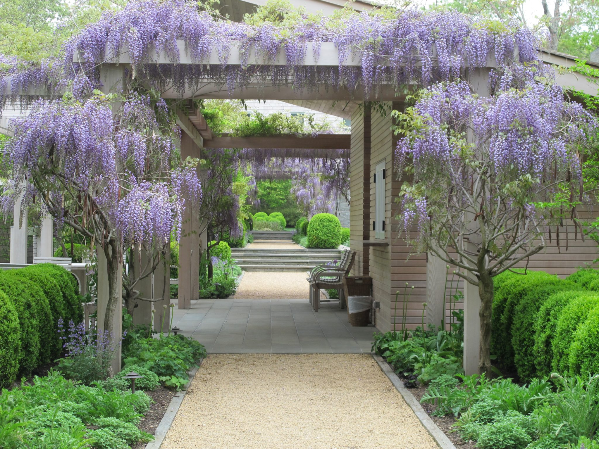 A wisteria-draped pergola and gravel path leads to the entry of home and garden. by Hollander Design Landscape Architects