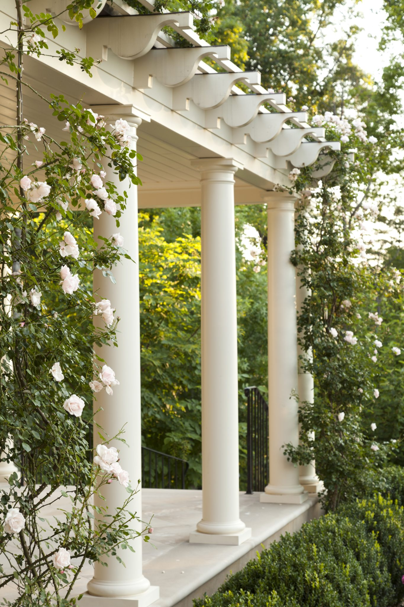 Rambling Roses on Pergola in a garden by Howard Design Studio. by Howard Design Studio